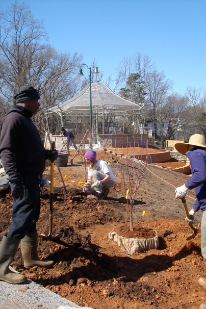 Bobbe, Charlie, Josh and Aubrey planting fruit trees on the Smith Street side of the Public Orchard.