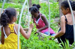 Ashe Street Community Garden and Education Center