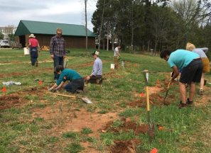 Planting Persimmons, Blueberries, and Blackberries