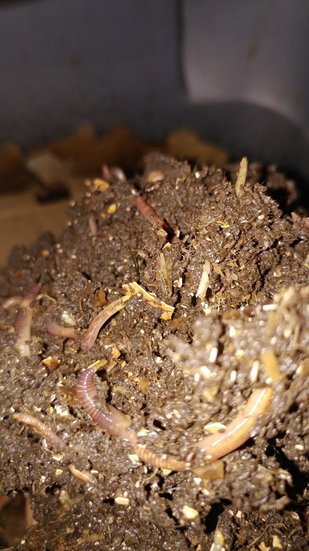 gPg Noir: Vermiculture!
